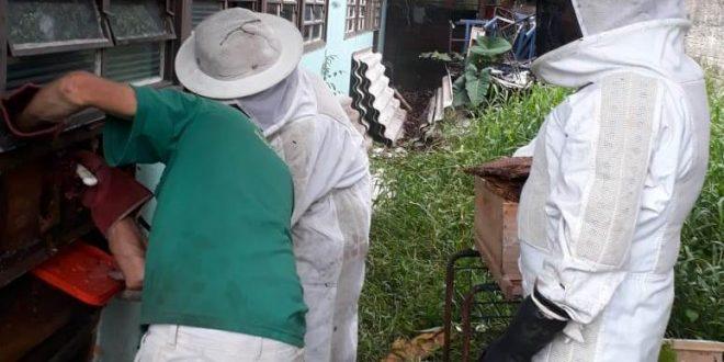 Grupamento de Defesa Ambiental retira enxame de abelhas de escola